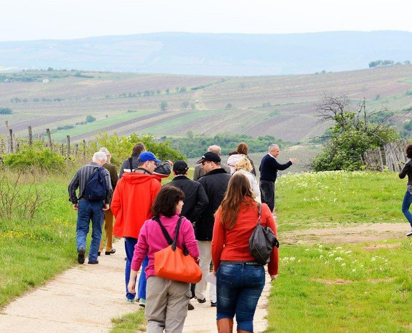 Great Tokaj Wine Auction 2014 - vineyard tour Zoltan Bakos - photo in the vineyards of Mád