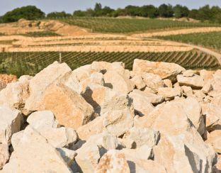 Vineyards in Mád