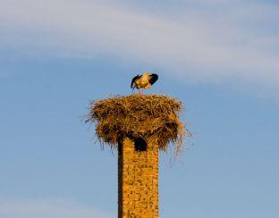 Photo of storks in Bodrogkeresztur