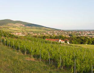Photo of Tarcal from Degenfeld estate