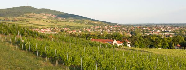 Photo of Tarcal from Degenfeld estate
